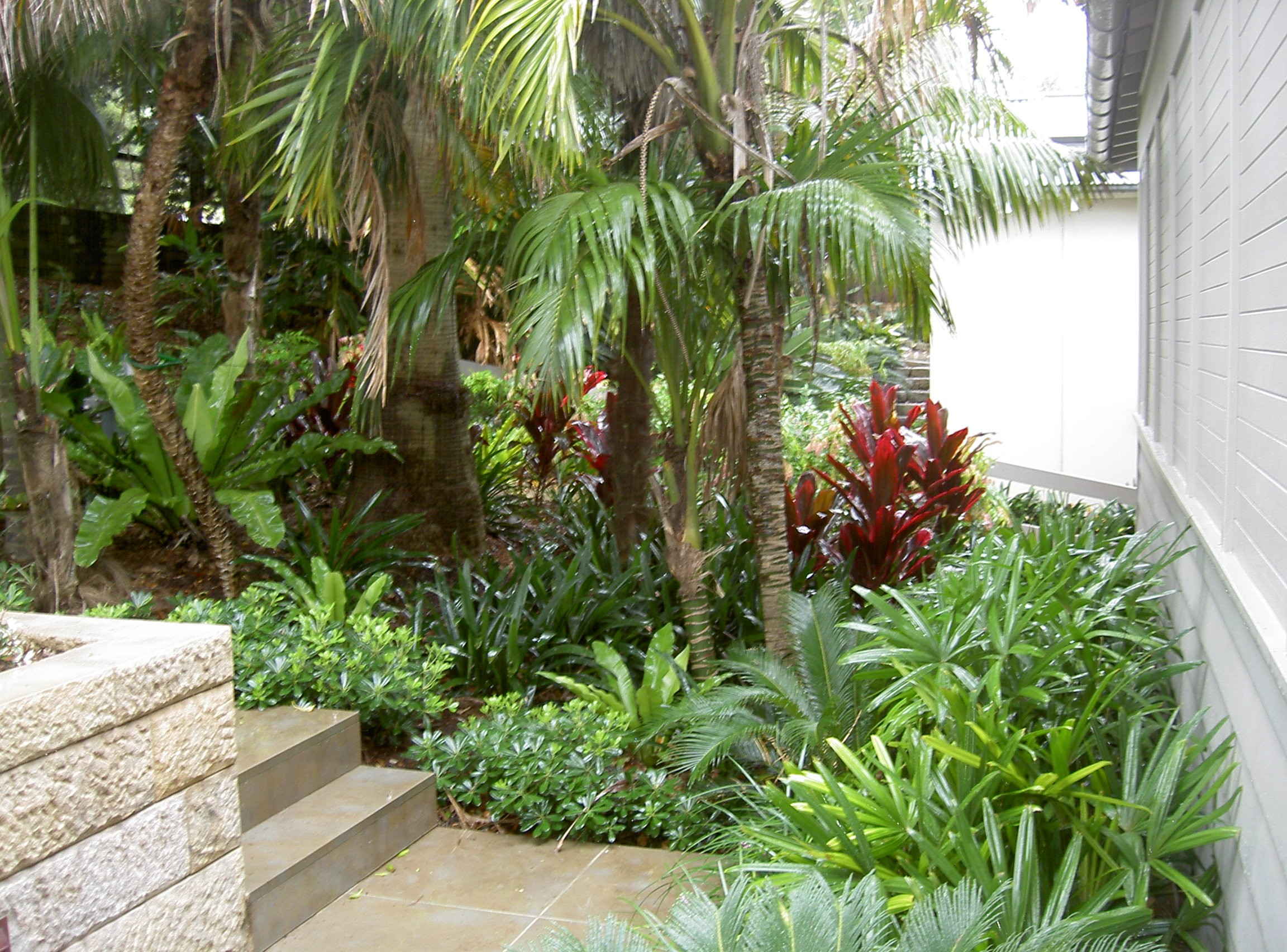 Sydney northern beaches landscape design gallery pettet for Tropical landscape